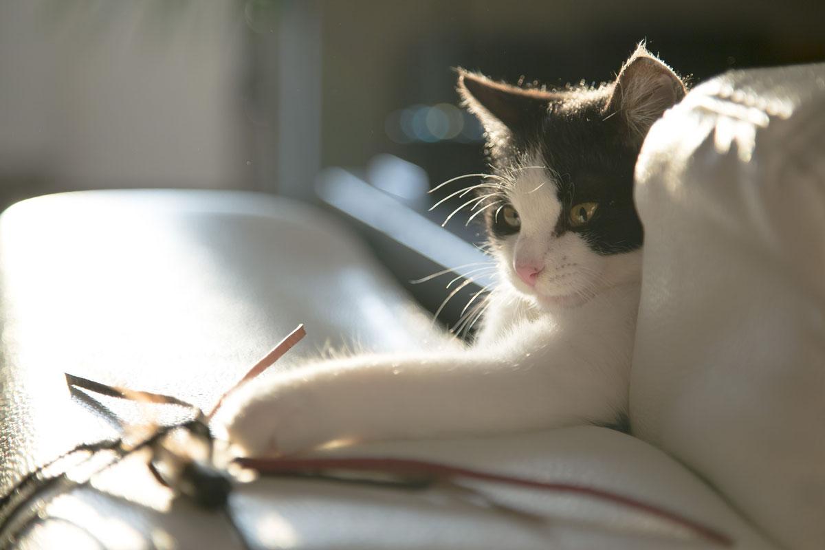 black white cat playing